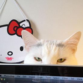 Bjork Cat Love Local Design mascot